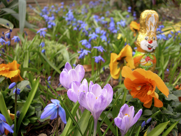 springflowerbunny.jpg